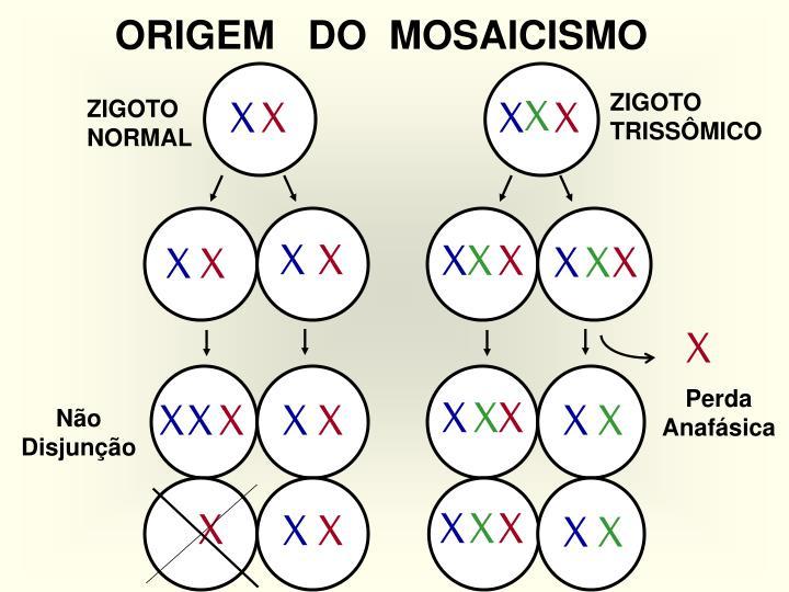 ORIGEM   DO  MOSAICISMO