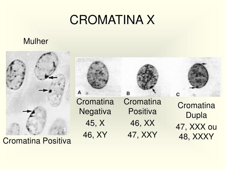 CROMATINA X