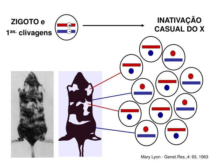 INATIVAÇÃO CASUAL DO X