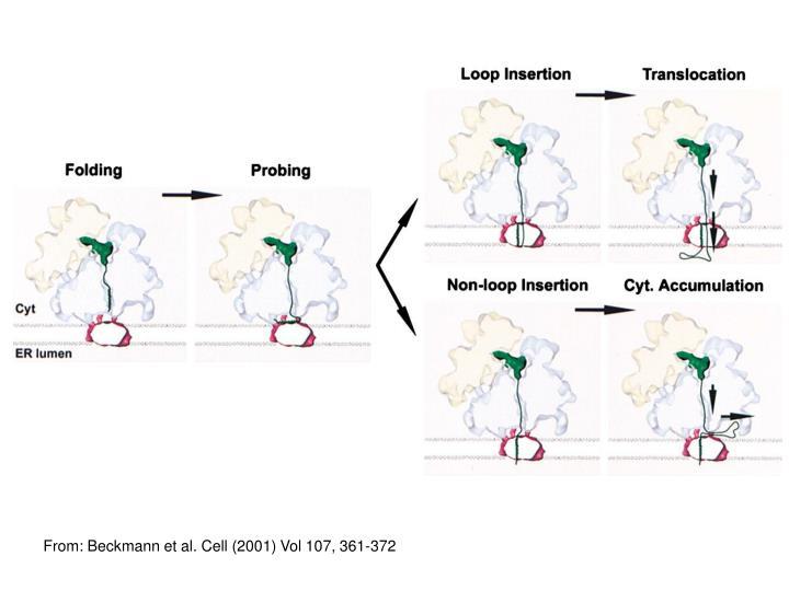 From: Beckmann et al. Cell (2001)