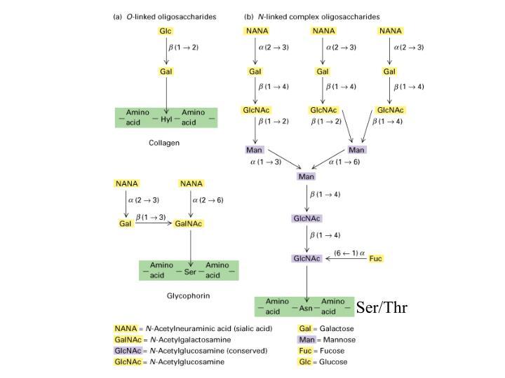 Ser/Thr