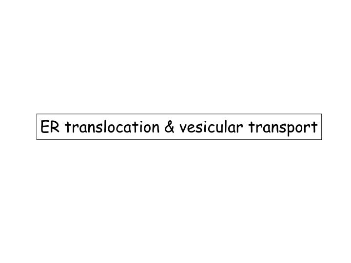 ER translocation & vesicular transport