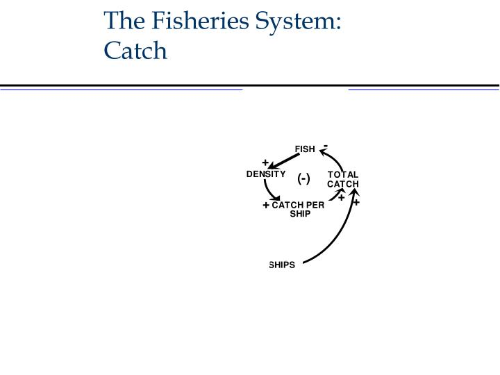 The Fisheries System: Catch