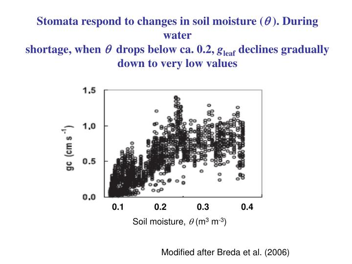 Stomata respond to changes in soil moisture (