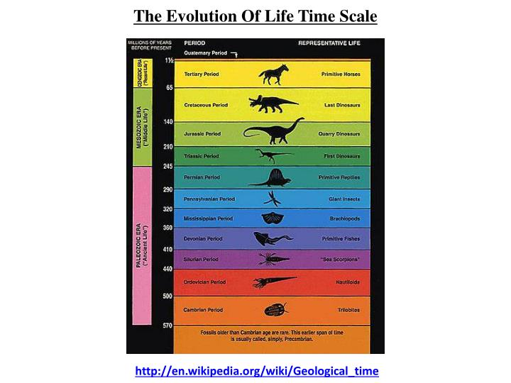 The Evolution Of Life Time Scale