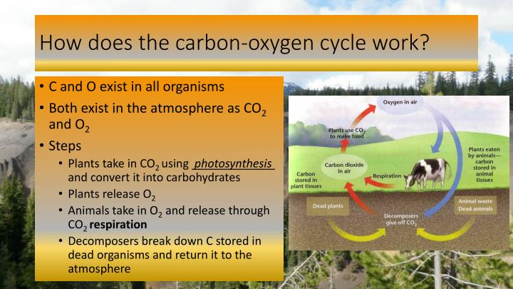 carbon dating how does it work The carbon dating assumptions need to be pointed out the earth's atmosphere is gaining 21 pounds of carbon 14 every year it is also losing carbon 14 through decay the question is how long would it take the atmosphere to reach a stage called equilibrium the people who invented carbon 14 dating in the 1940's did a lot of studies on this matter.