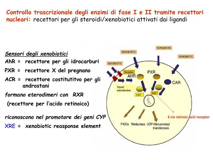 Controllo trascrizionale degli enzimi di fase I e II tramite recettori nucleari: