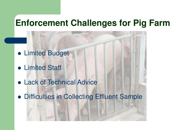 Enforcement Challenges for Pig Farm