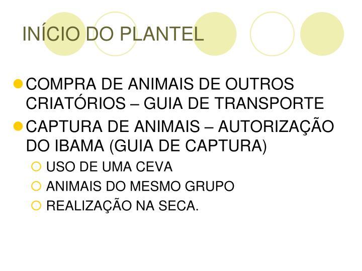 INÍCIO DO PLANTEL