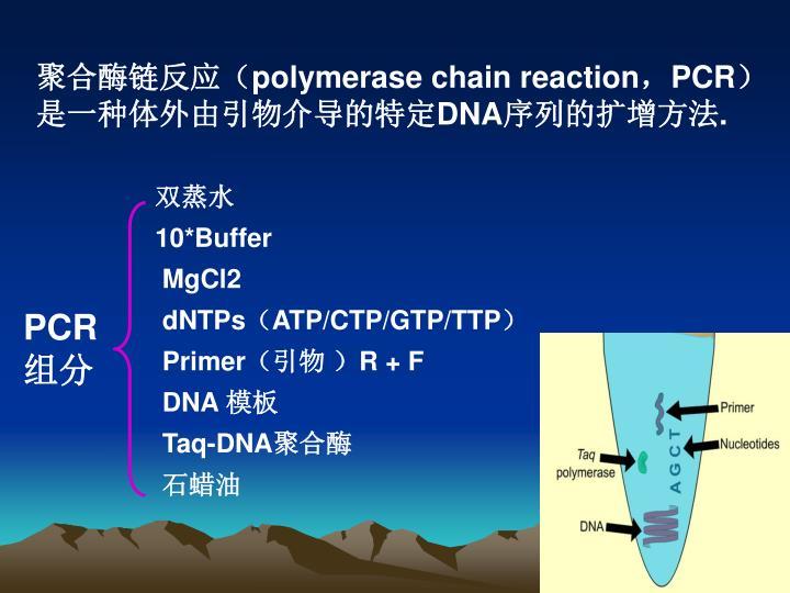 聚合酶链反应(