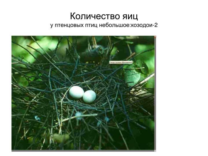Количество яиц