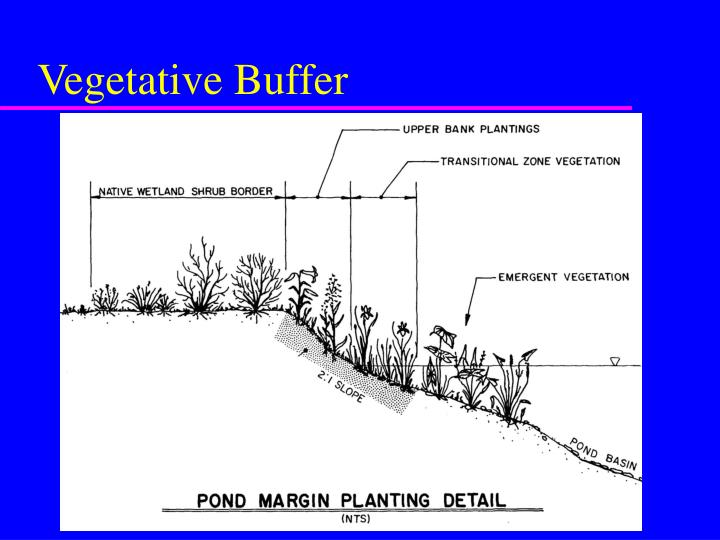 Vegetative Buffer