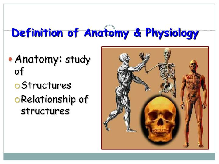 Definition of anatomy physiology