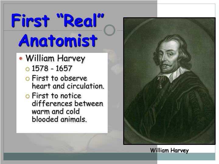 "First ""Real"" Anatomist"