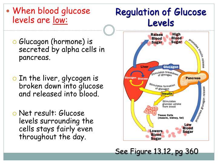 Regulation of Glucose Levels