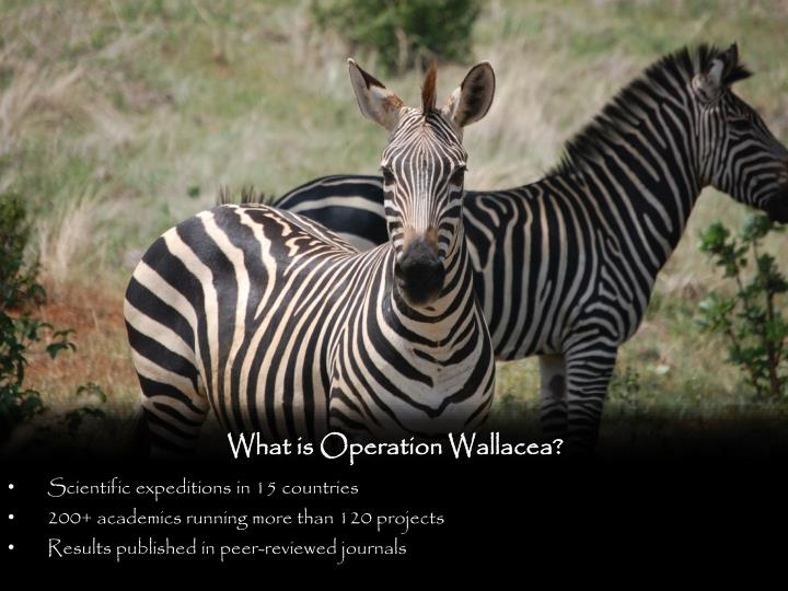 What is Operation Wallacea?