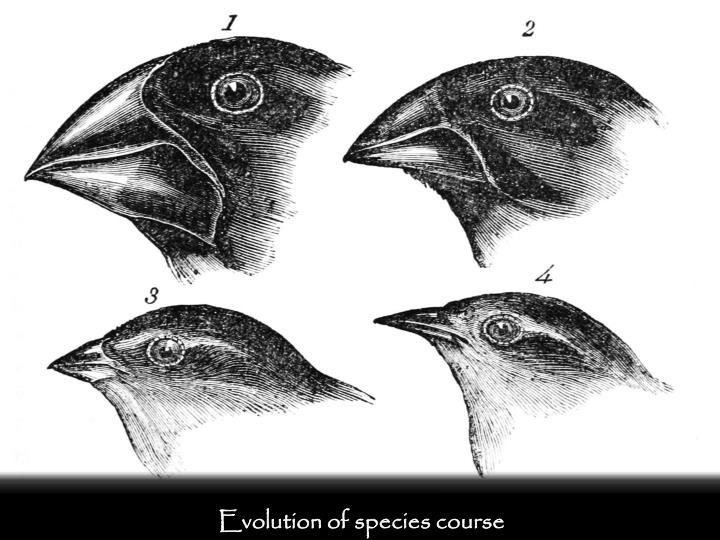 Evolution of species course
