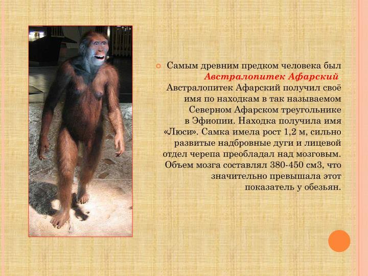 Самым древним предком человека был