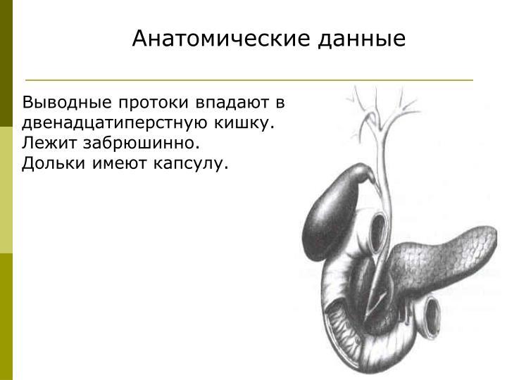 Анатомические данные