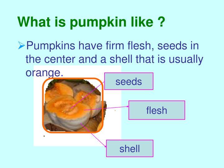 What is pumpkin like ?