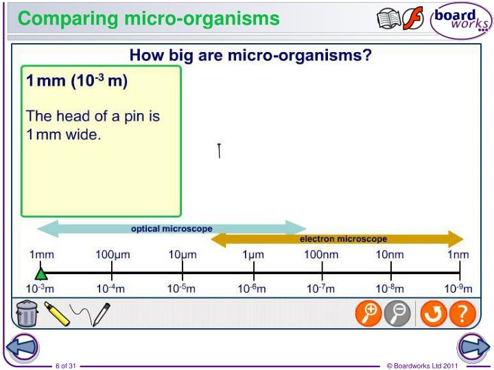 Comparing micro-organisms