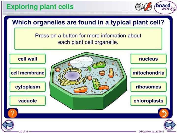 Exploring plant cells