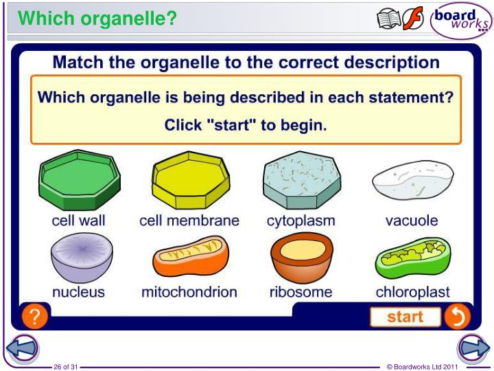 Which organelle?