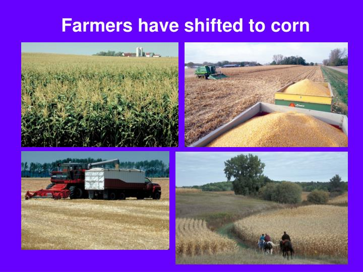 Farmers have shifted to corn
