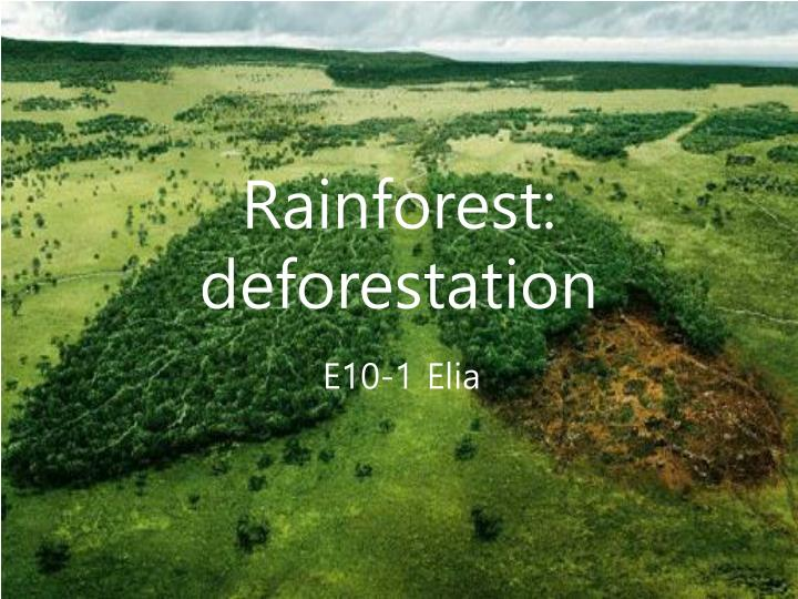 deforestation of the rainforests essay