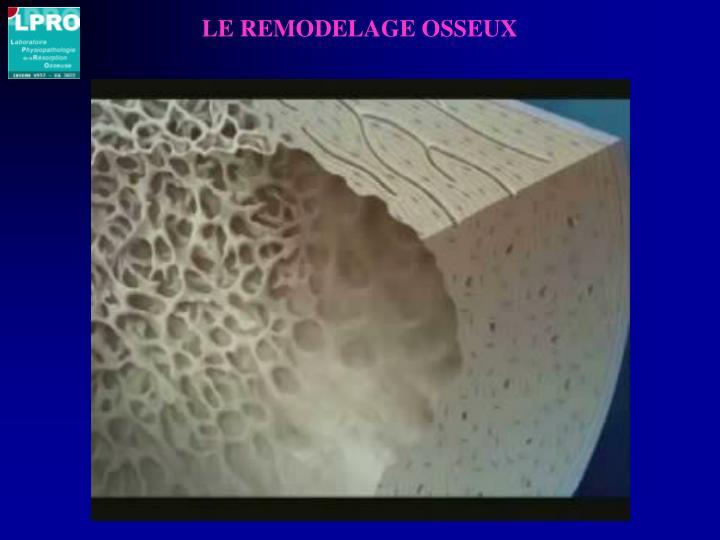 LE REMODELAGE OSSEUX
