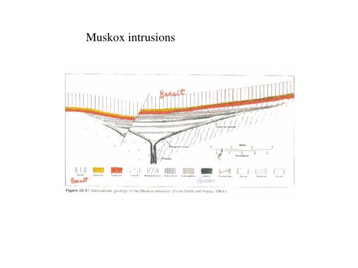 Muskox intrusions