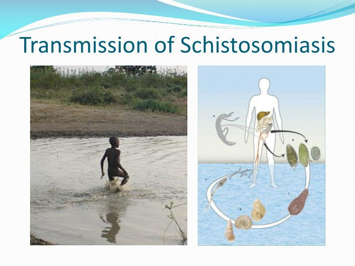 Transmission of Schistosomiasis