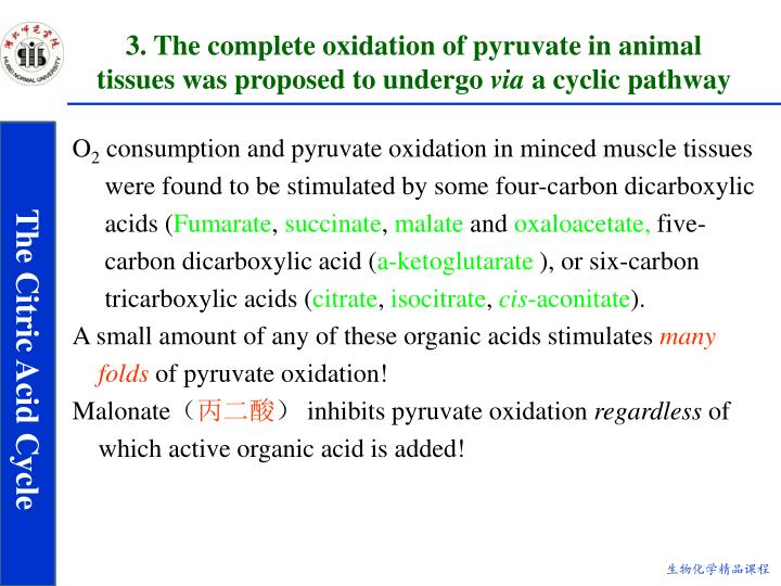 3. The complete oxidation of pyruvate in animal tissues was proposed to undergo