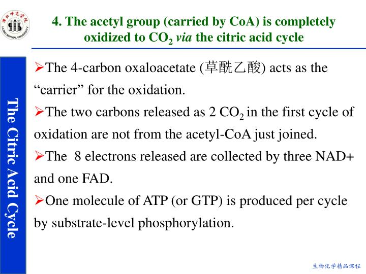 4. The acetyl group (carried by CoA) is completely oxidized to CO