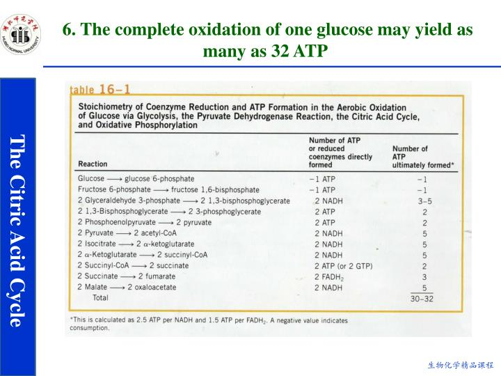 6. The complete oxidation of one glucose may yield as many as 32 ATP