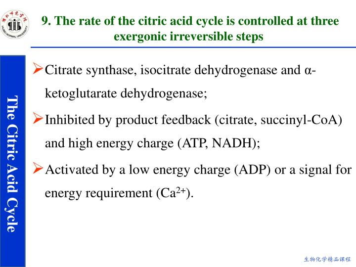 9. The rate of the citric acid cycle is controlled at three exergonic irreversible steps