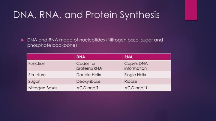 DNA, RNA, and Protein