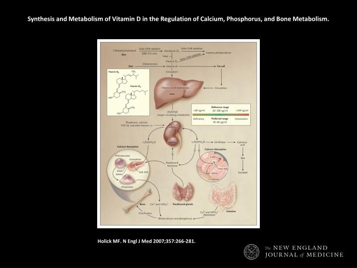 Synthesis and Metabolism of Vitamin D in the Regulation of Calcium, Phosphorus, and Bone Metabolism.