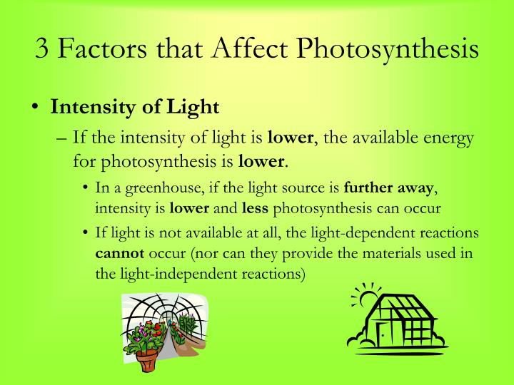 3 Factors that Affect Photosynthesis