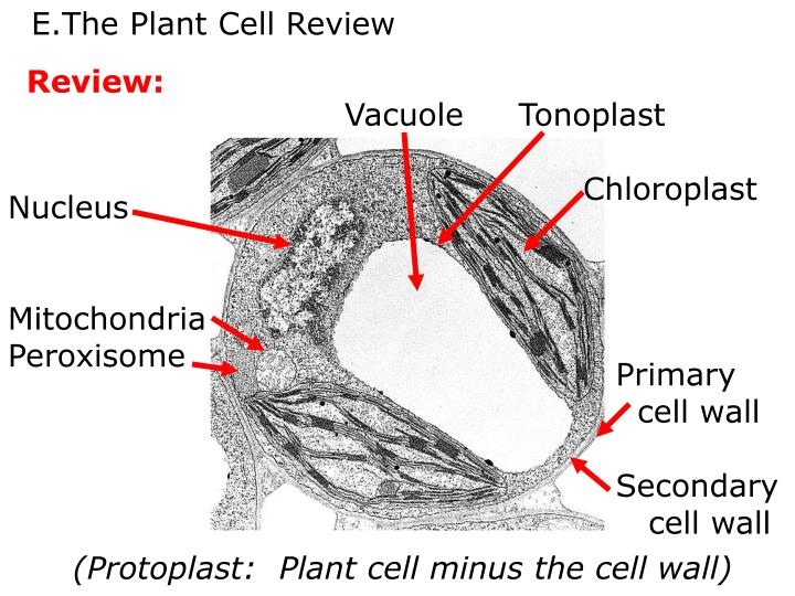 The Plant Cell Review