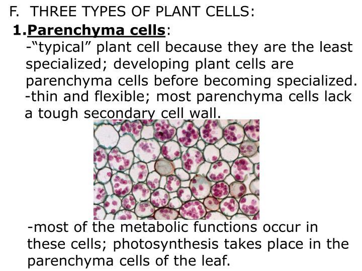 F.  THREE TYPES OF PLANT CELLS: