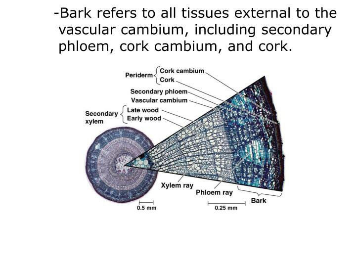-Bark refers to