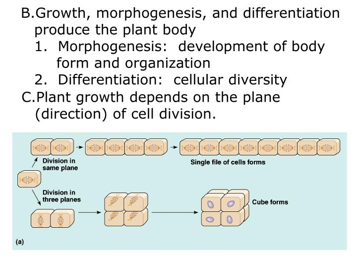 Growth, morphogenesis, and differentiation