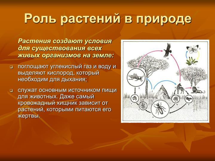 Роль растений в природе