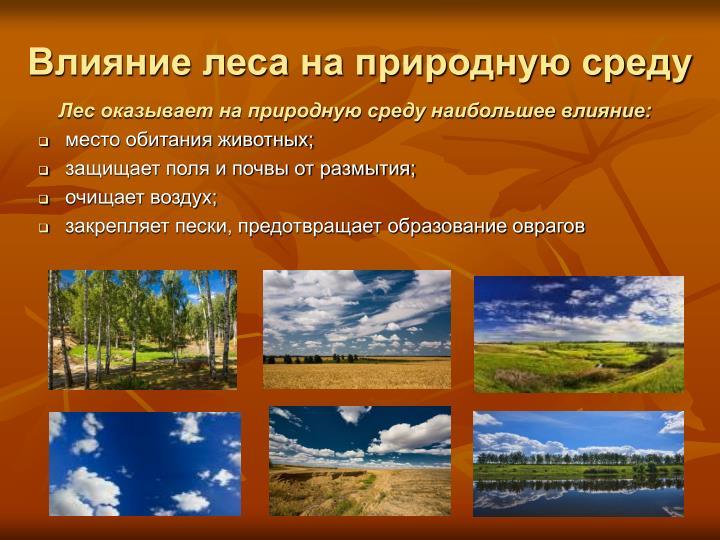 Влияние леса на природную среду
