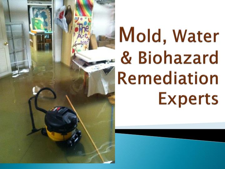 M old water biohazard remediation experts