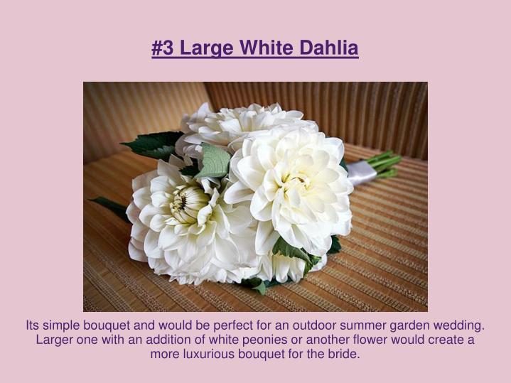 #3 Large White Dahlia