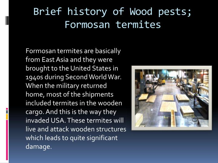 Brief history of wood pests formosan termites