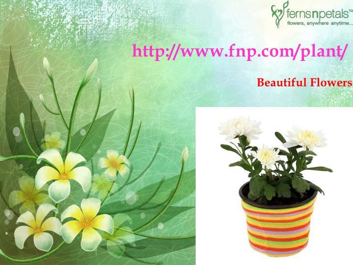 http://www.fnp.com/plant/