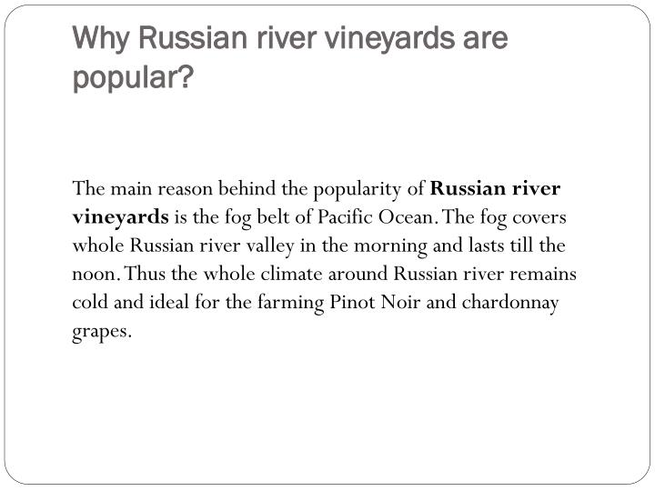 Why Russian river vineyards are popular